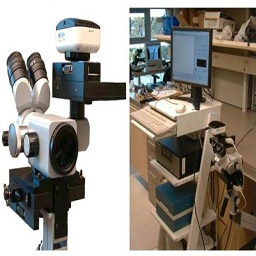 Optical technologies and molecular imaging for cervical neoplasia: a program project update