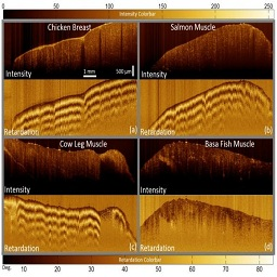 Fiber-Based Polarization Diversity Detection for Polarization-Sensitive Optical Coherence Tomography